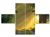Több részes vászonkép napos erdő