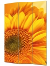 Vászon paraván 120x180 cm napraforgó mintázattal